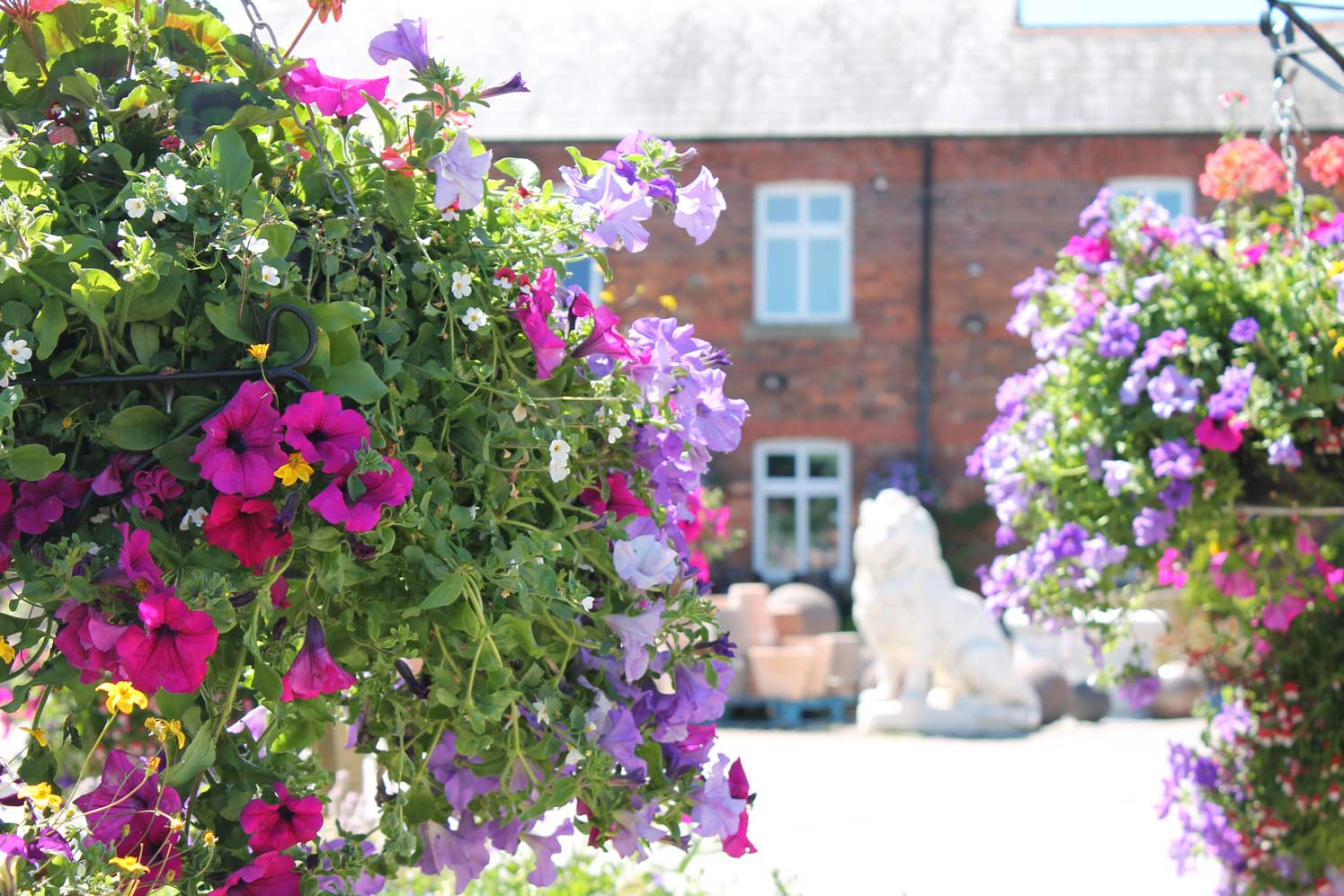Hanging Baskets and Plants, The Pot Place Plumpton Cumbria
