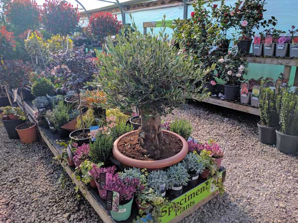 Plants and shrubs at The Pot Place Plumpton Cumbria