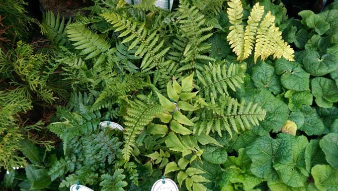 Specimen plants and shrubs, The Pot Place Plumpton