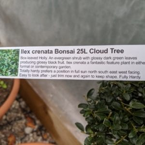 Pom Pom Tree label