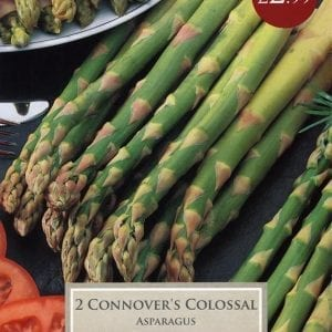 Asparagus Connovers Colossal